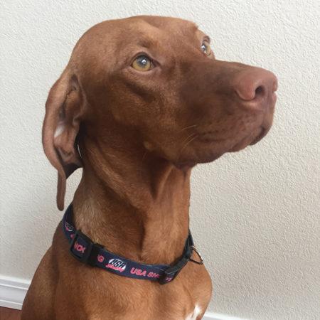 USA Shooting Pet Collar